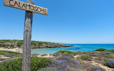 Beach Calamosche
